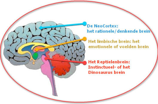 wat hebben hypnotherapie en etherische oli u00ebn met elkaar te